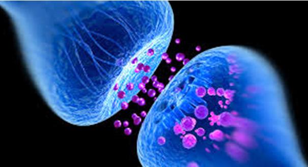 Neurotransmissores e hormônios