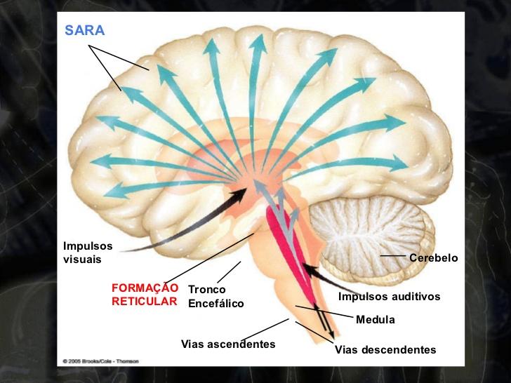 Ativação do hemisfério esquerdo na hipnose
