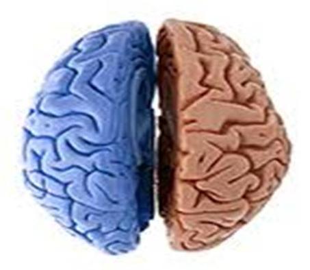 Cérebro e lateridade hemisférica