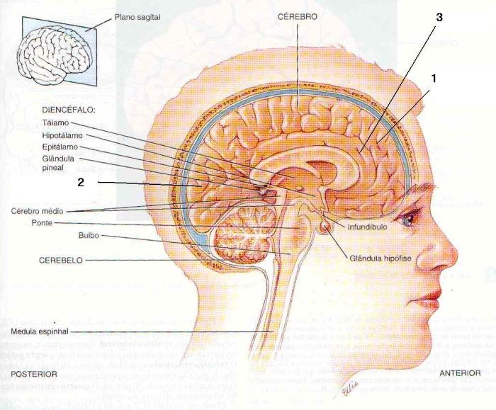 giro frontal e hipnoses