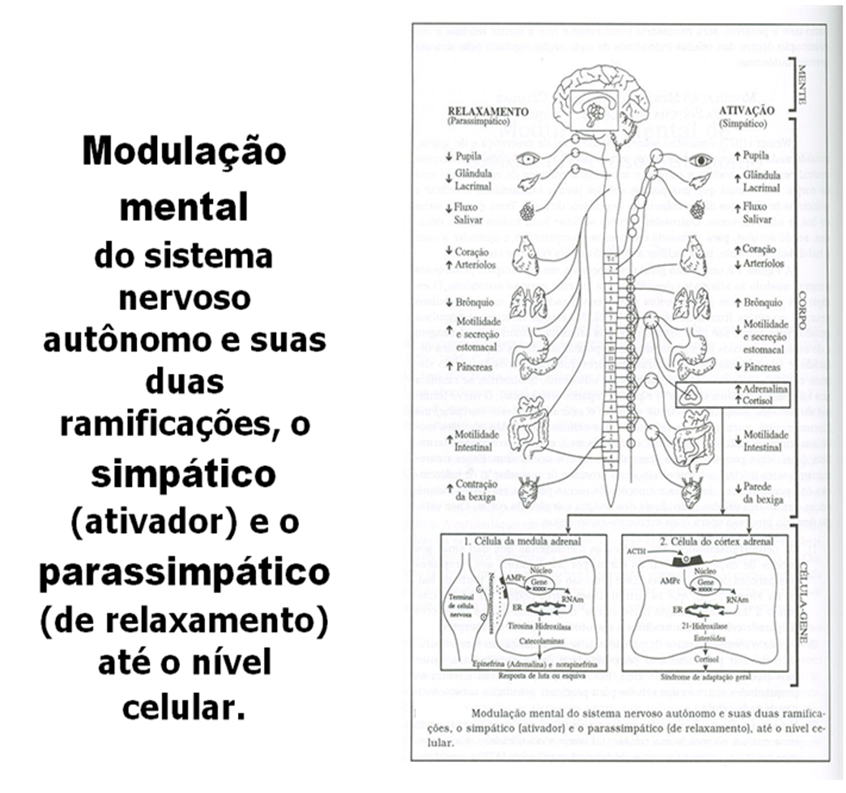modulacao mental