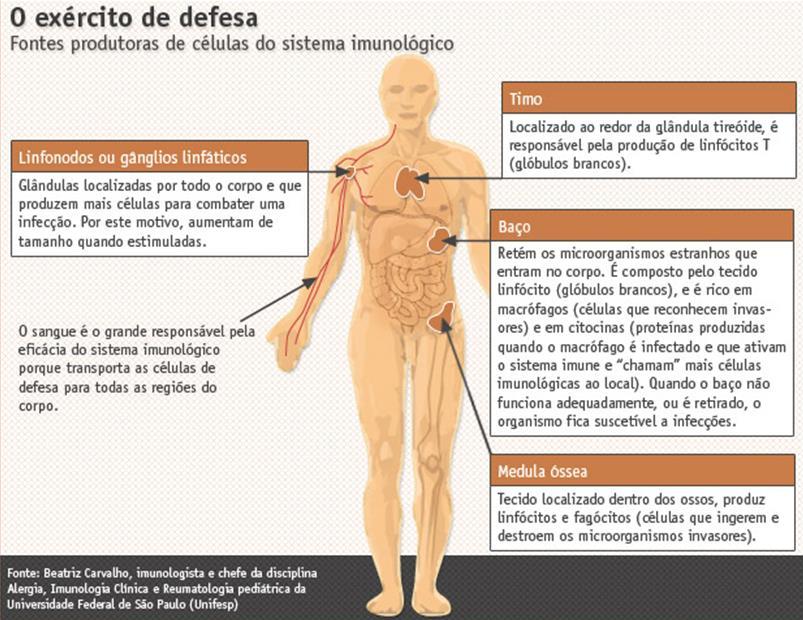 sistema imunologico como funciona no corpo