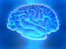 Cerebro em hiponse psicoterapia